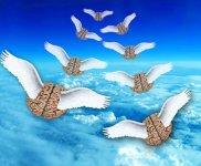 «Аҡыллы баштар» ситкә оса